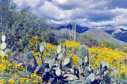 Sabino Canyon awash in color in the Spring